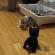 Котенок scottish-fold против робота.