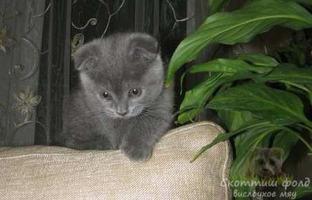 знакомство котенка с новым домом