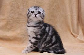 Имена для котят