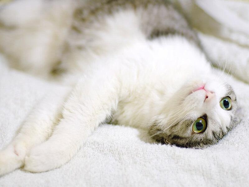 20 самых распространеных болезней у кошек