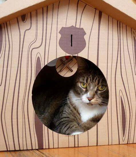 Дизайнерские идеи для удобства вашей кошки