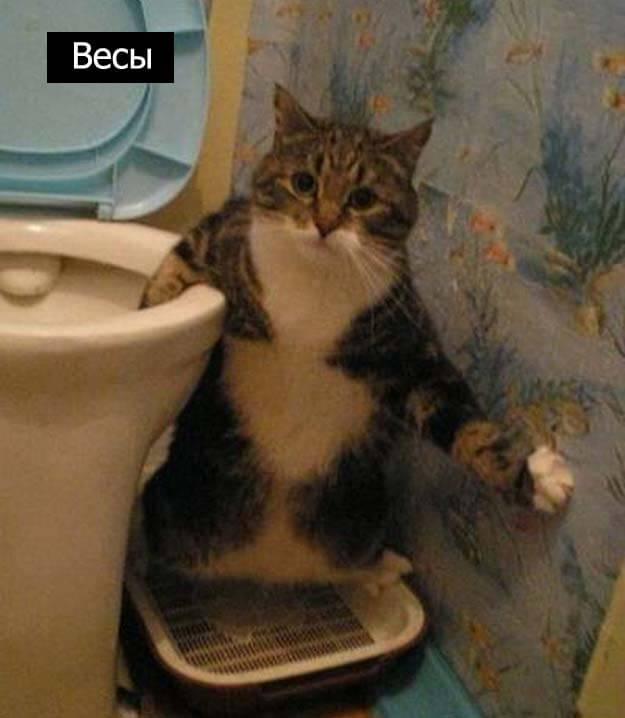 Знаки зодиак у кошек весы