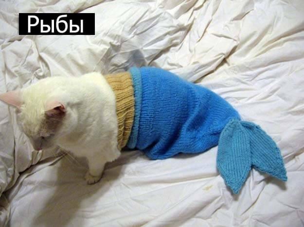 Знаки зодиак у кошек  рыбы