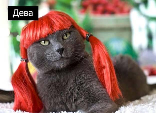 Знаки зодиак у кошек дева