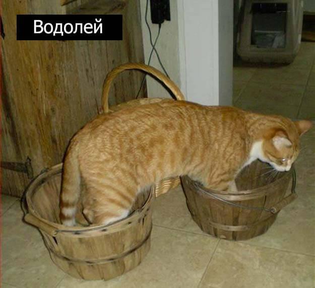 Знаки зодиак у кошек водолей