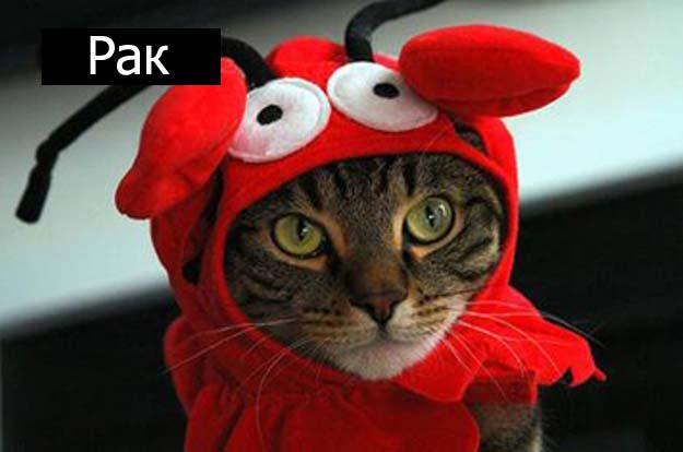 Знаки зодиак у кошек рак