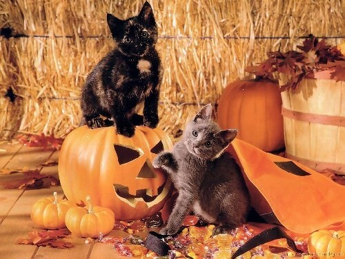 С наступающим  хеллоуином!!!