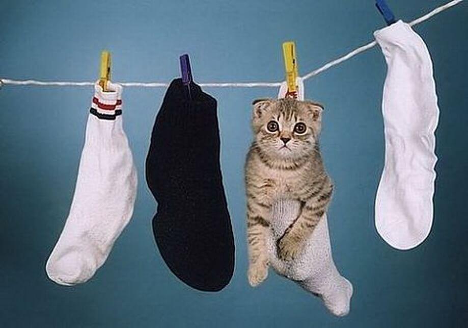 Не закрывайте кошек в стиральных машинах