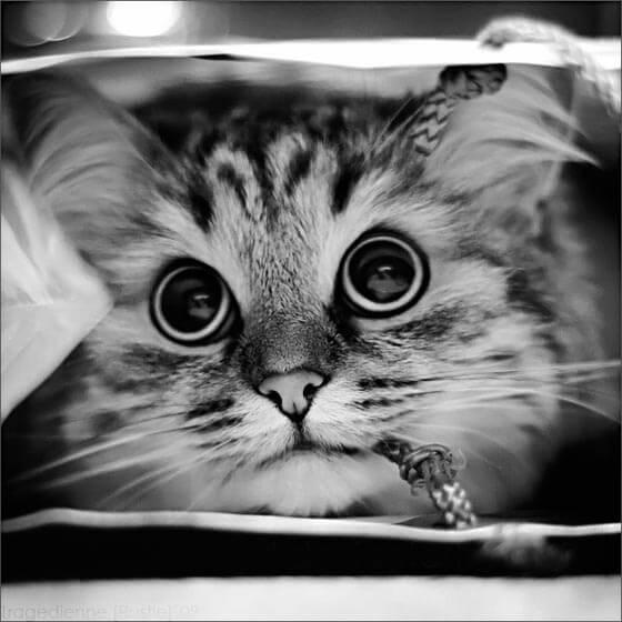 Ой, Кошка! Прекрасная Кошка!