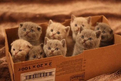 Коробка полная котят