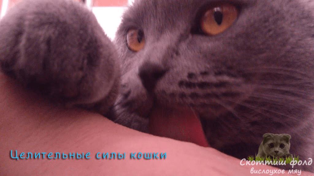 Целительные силы кошки