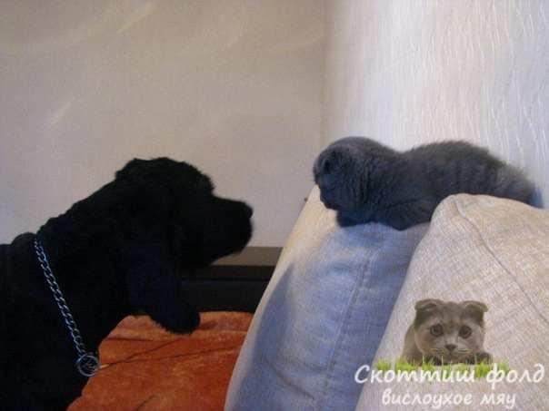 Кошка и собака. Как ужиться двум соперникам