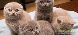 Блохи у котят: как избавить малышей от паразитов