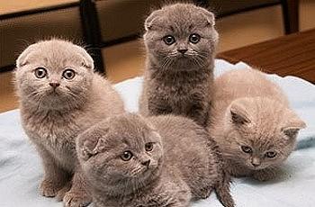Блохи у маленьких котят: как избавить малышей от паразитов