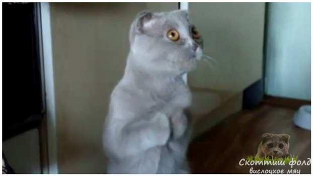 Видео  Попрошайничество кошек