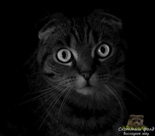 Могут ли кошки видеть в темноте лучше людей