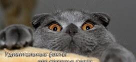 Удивительные факты про кошачьи глаза
