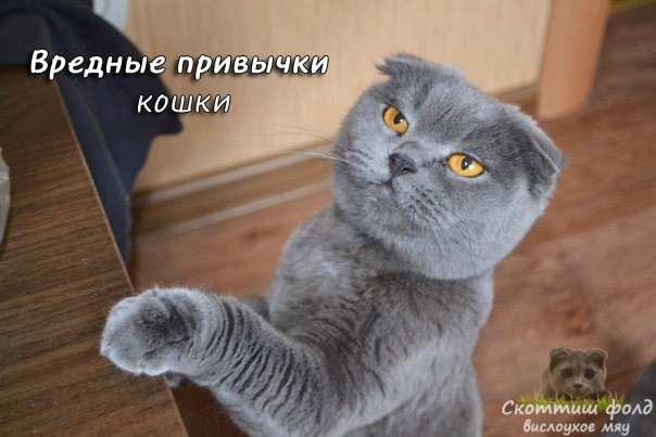 Вредные привычки кошки