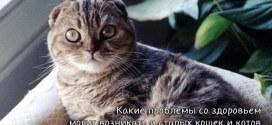 Какие проблемы со здоровьем могут возникать у старых кошек и котов