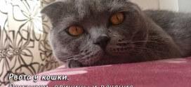 Рвота у кошки. Признаки, причины и лечение
