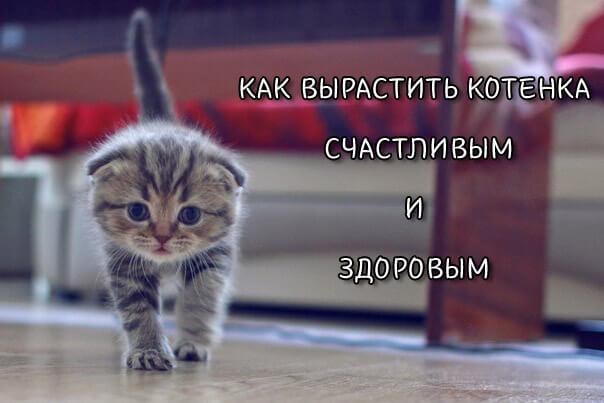 Как вырастить котенка счастливым и здоровым