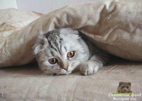 Когда вы приносите котенка в дом, правильным будет подержать его несколько дней в одной и той же комнате,