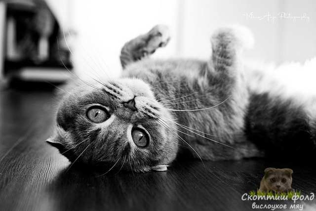 Кошки – независимые, асоциальные создания