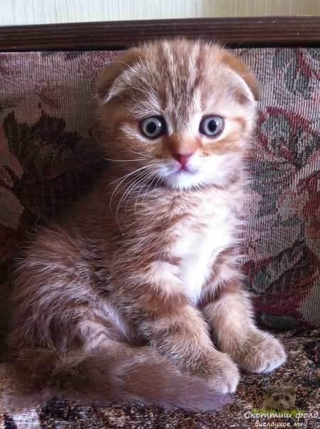 Пока котенок растет