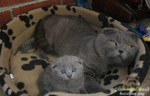 Сколько могут прожить кошки