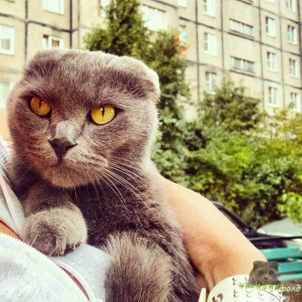 Сколько живут уличные кошки