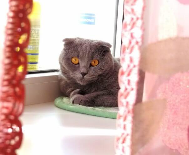 Средняя продолжительность жизни кошки