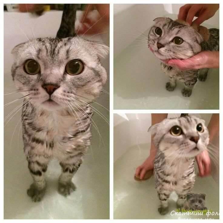 кошки любят воду