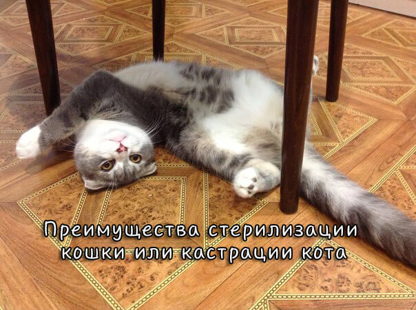 Преимущества стерилизации кошки или кастрации кота