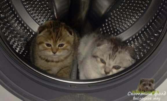 Кошки разгоняют друг другу скуку