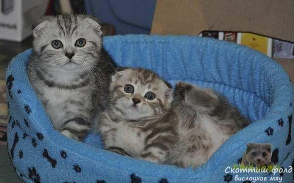 Правда ли, что лучше иметь две кошки, чем одну 2