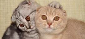Две кошки в доме: Веселая жизнь без ссор