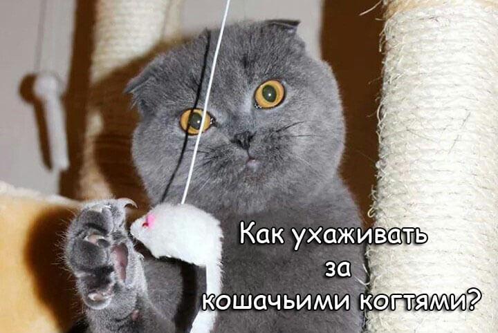 Как ухаживать за кошачьими когтями