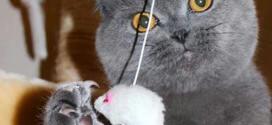 Как ухаживать за кошачьими когтями?