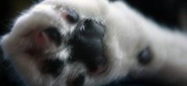 Почему не следует удалять когти кошкам