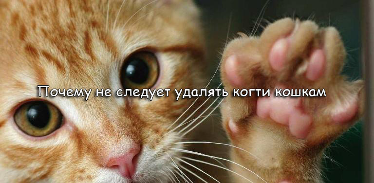Почему не следует удалять когти кошкам logo