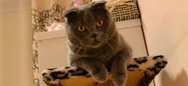 Кошачья память как устройство хитрого существа