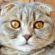 История про такт и кошку (Предновогодняя)