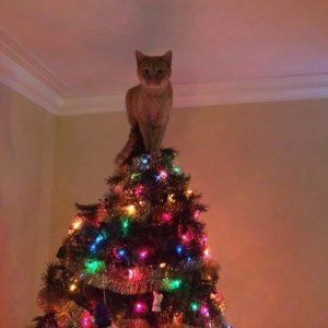 Новогодняя елка против кошки: как выстоять в нелегком бою?
