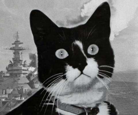 История кота, трижды попадавшего в кораблекрушения и трижды спасшегося