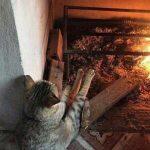 Смешные коты, которые поднимают настроение # 106