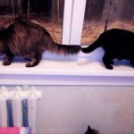 Кормление котов и кошек: Следует ли придерживаться расписания?
