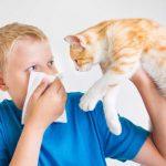 Гипоаллергенные кошки: полный список пород
