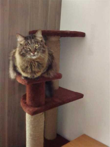 Кошка, которая гуляет сама по себе!