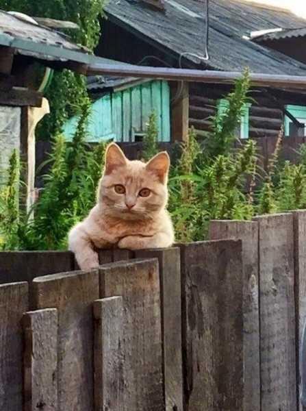 Смешные коты, которые поднимают настроение # 104
