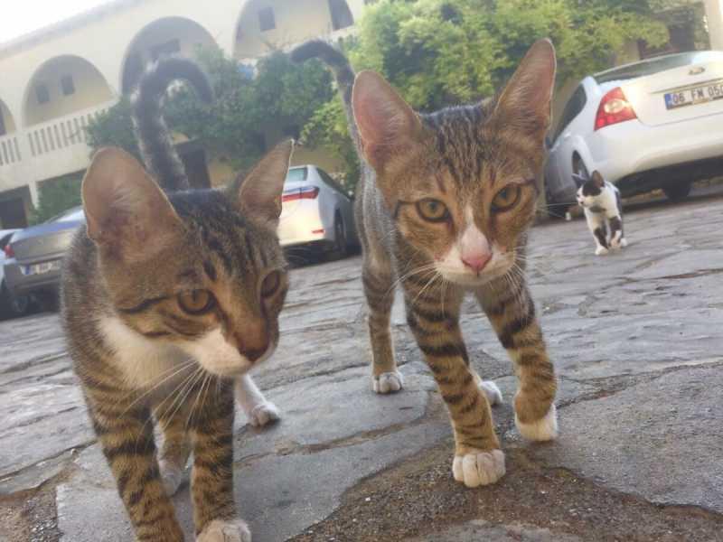 Смешные коты, которые поднимают настроение # 114